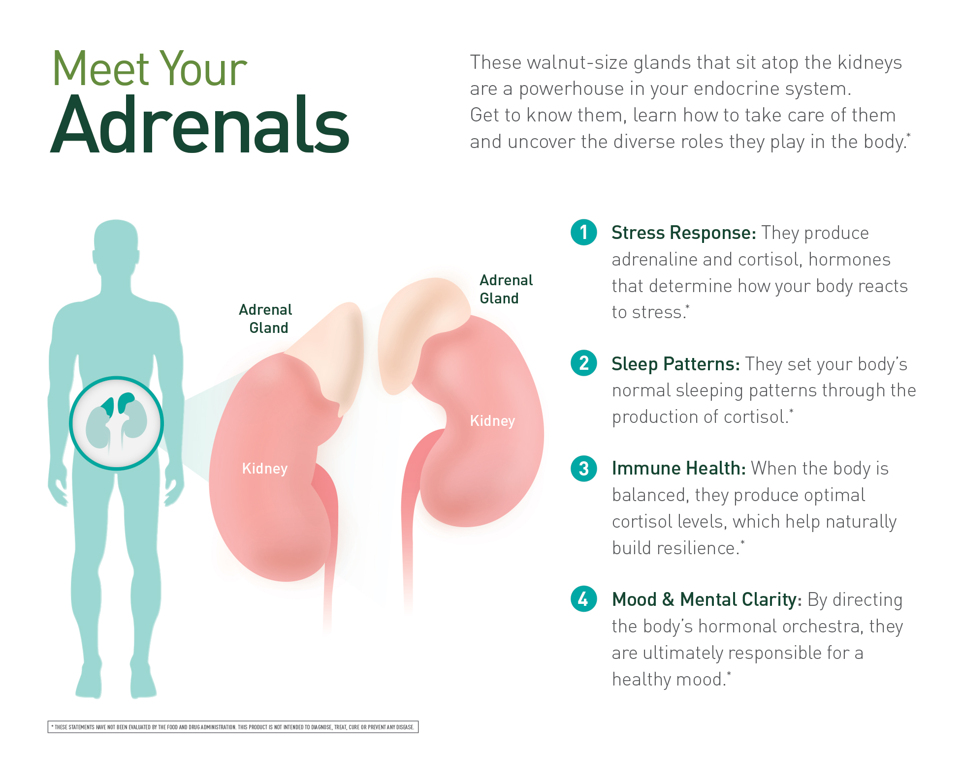 Adrenals.jpg - 578.56 kB